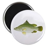 Nile Perch Magnets