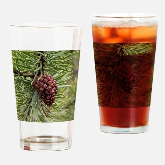 Pine Cone Drinking Glass