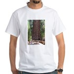 General Sherman Sequoia with Girls White T-Shirt