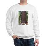 General Sherman Sequoia with Girls Sweatshirt