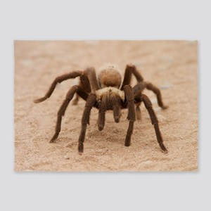 Tarantula Spider 5'x7'Area Rug