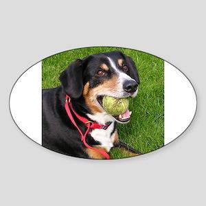 entlebucher mountain dog w ball Sticker