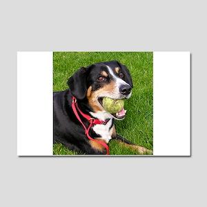 entlebucher mountain dog w ball Car Magnet 20 x 12