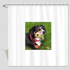 entlebucher mountain dog w ball Shower Curtain