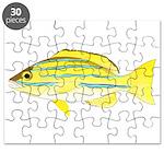 Bluestripe Snapper Puzzle