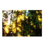 Light messengers Postcards (Package of 8)