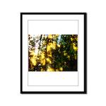 Light messengers Framed Panel Print