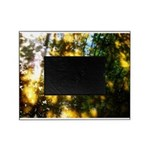 Light messengers Picture Frame