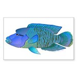 Humphead Wrasse Sticker