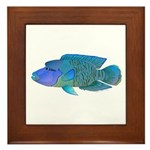 Humphead Wrasse Framed Tile