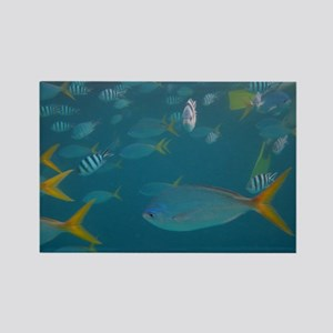 Fish Photo Rectangle Magnet (100 pack)