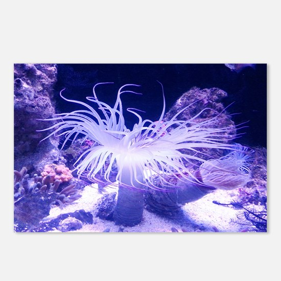 Anenome bth Postcards (Package of 8)
