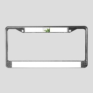 ORIGINAL MEDICINE License Plate Frame