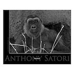 """Anthony Satori 16x20 """"Silverback"""" Small"""