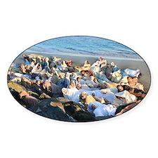 Walrus Pile Sticker