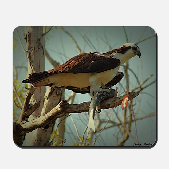 Osprey Having Lunch Mousepad