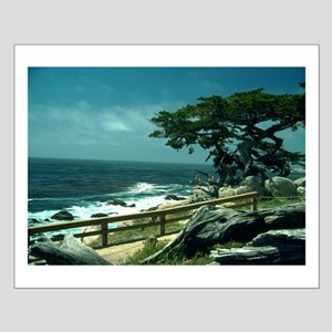 Lone Cypress Tree Posters