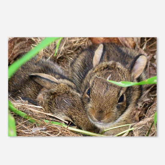 Bunnies in the Garden Postcards (Package of 8)