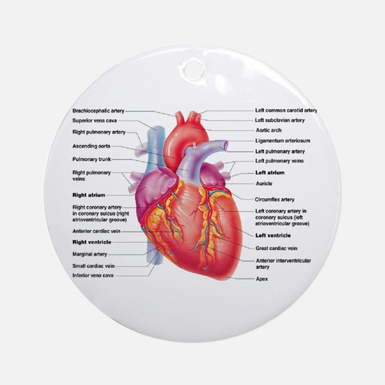 Human Heart Ornament (Round)