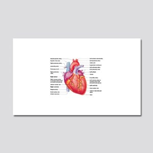 Human Heart Car Magnet 20 x 12