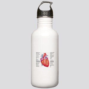 Human Heart Water Bottle