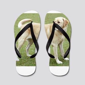 3 full yellow lab Flip Flops