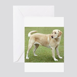 3 full yellow lab Greeting Cards