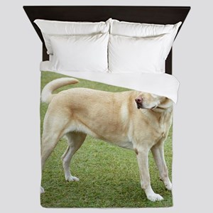 3 full yellow lab Queen Duvet