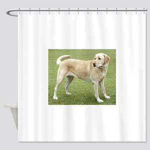 3 full yellow lab Shower Curtain