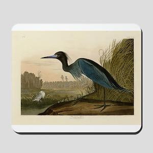 Audubon Blue Crane Heron from Birds of America Mou