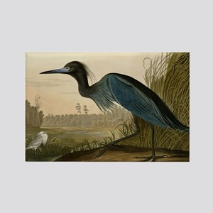 Audubon Blue Crane Heron from Birds of America Mag