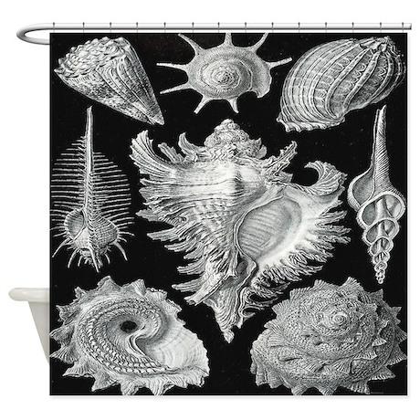 Vintage Haeckel Sea Shell Shower Curtain