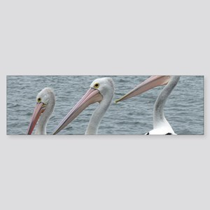 Three Gorgeous Pelicans Sticker (Bumper)