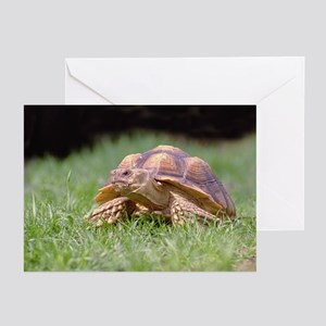 Gummer Looking Left Greeting Cards (Pk of 10)