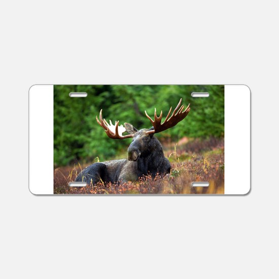 Majestic Moose Aluminum License Plate