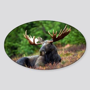 Majestic Moose Sticker