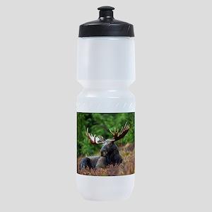 Majestic Moose Sports Bottle