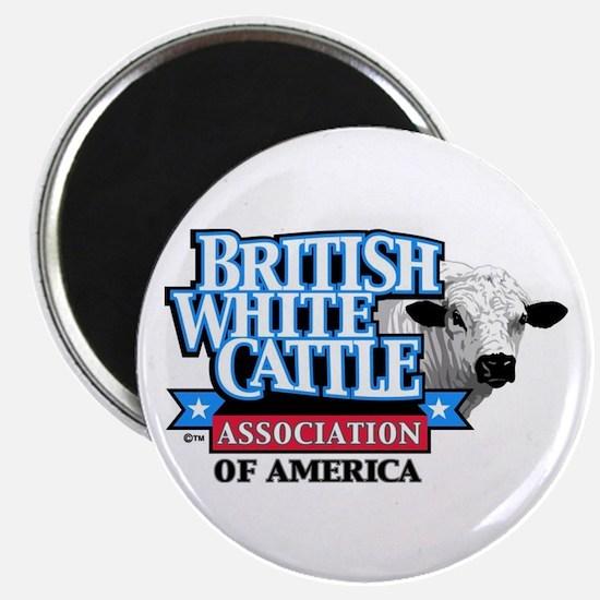 Popular British White Cattle Magnet