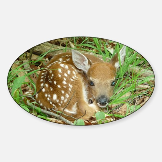 spotted fawn Sticker (Oval)