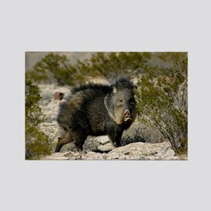 Javelina Magnets