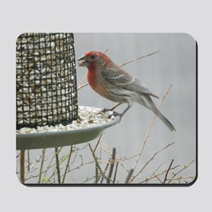 Purple Finch at the feeder Mousepad