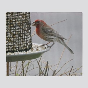 Purple Finch at the feeder Throw Blanket