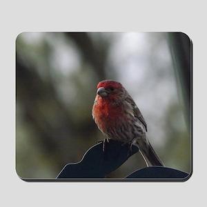 Purple Finch - 1 Mousepad