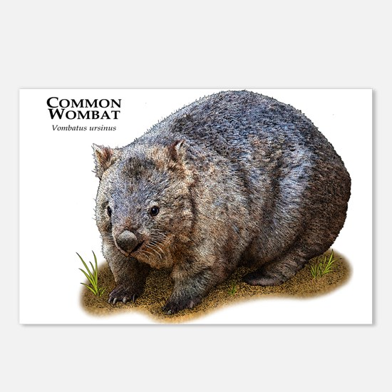 Common Wombat Postcards (Package of 8)