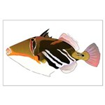White-Banded Lagoon Triggerfish Posters