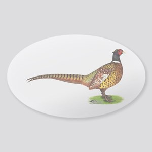Proud Ringneck Pheasant Sticker