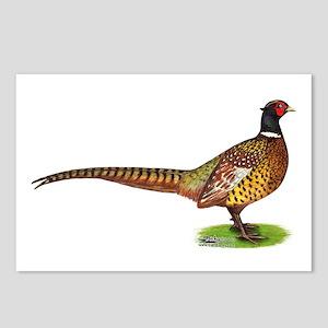 Proud Ringneck Pheasant Postcards (Package of 8)