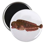 Pacific Wolf Eel tc Magnets