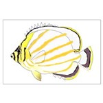 Ornate Butterflyfish Posters