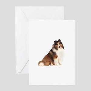 Shetland Sheepdog (sw7) Greeting Card